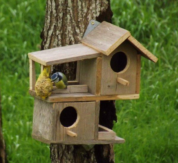 superior cabane pour les oiseaux 14 comment fabriquer un mangeoire pour oiseaux bricolage. Black Bedroom Furniture Sets. Home Design Ideas