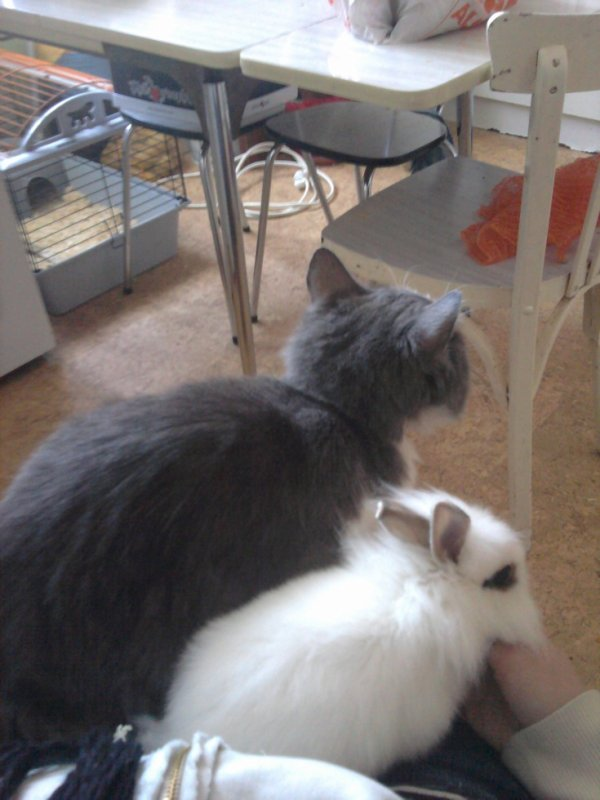 mon chat et mon lapin