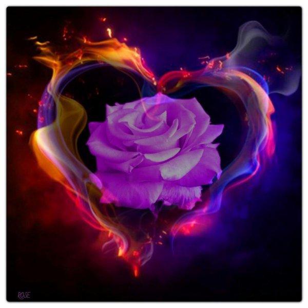 image de rose