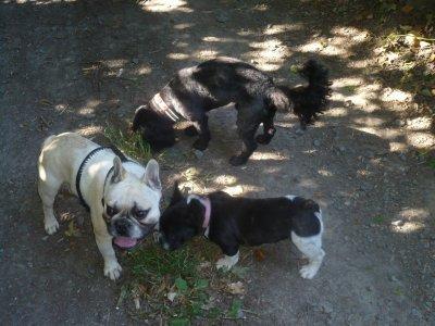 """Les monstres avec leur """"cousin"""" Dingo (caniche croisé bichon)"""