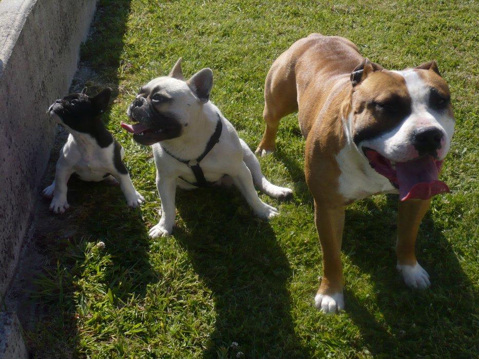 Blog de bouldoguidog