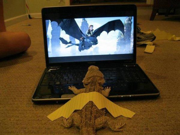 Moi aussi je vais devenir un grand dragon!