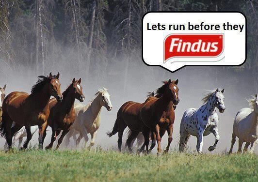 Findus!