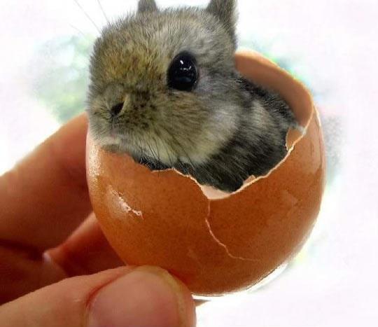 Un lapin dans un oeuf?