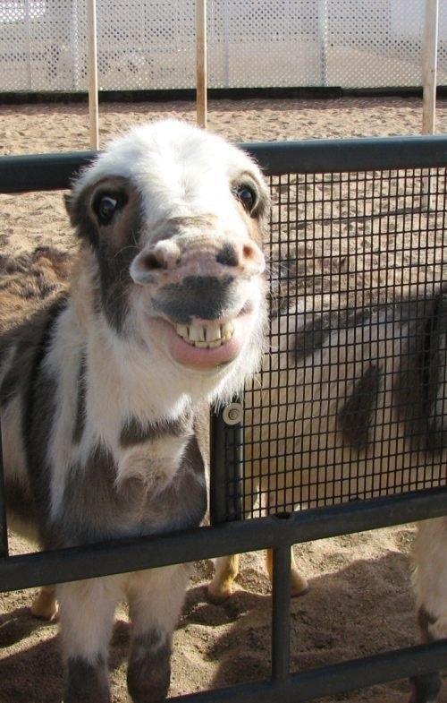 J'ai le smile moi!