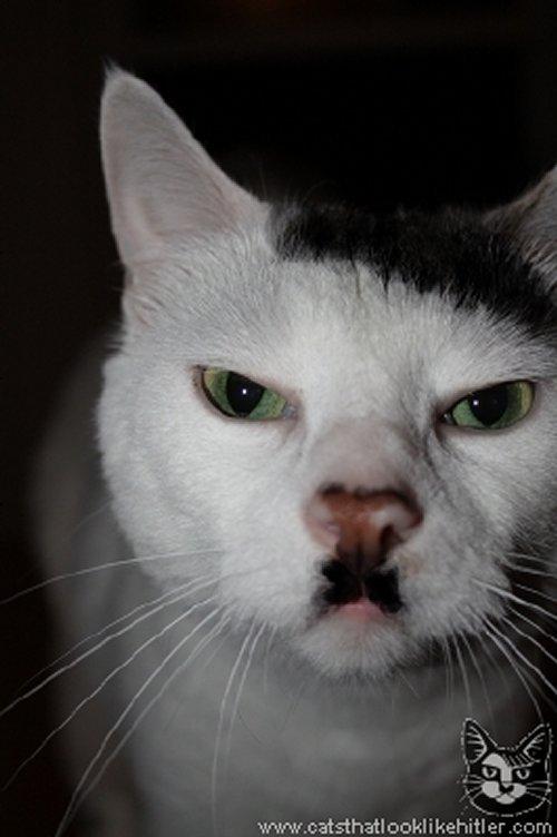 A qui vous fait penser ce chat? :O