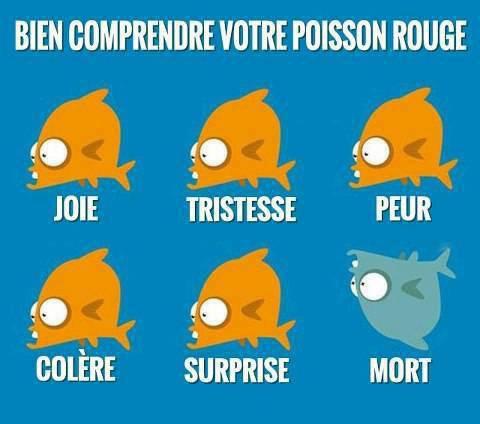 Bien comprendre votre poisson rouge!