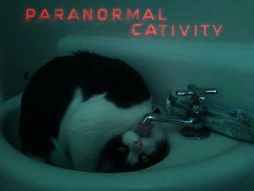 Paranormal Cativity!