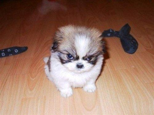 Je crois qu'il est pas content!