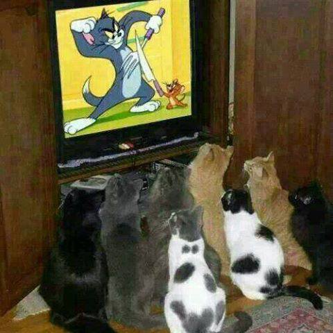 Tom et Jerry c'est pour les chats!