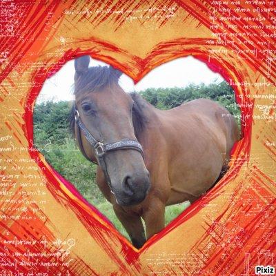 mon cheval d'amouur<3
