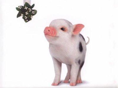 Un cochon mignon blog de mesanimaux 62 - Image de cochon mignon ...