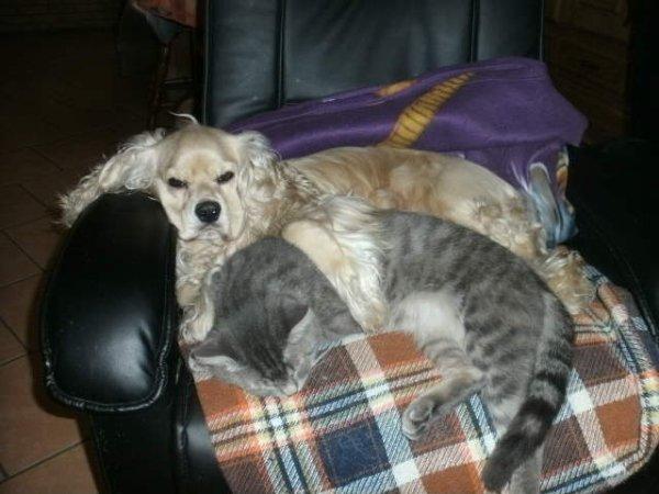 mon chien avec mon chat