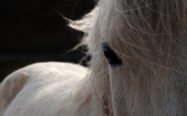 """""""Rien est plus prescieux q'un cheval """""""