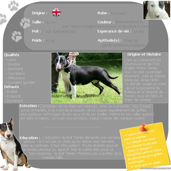 .  Le Bull Terrier  .