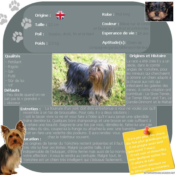 .  Le Yorkshire Terrier  .