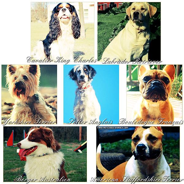 .  Chaque année, la SCC (Société Centrale Canine) publie le palmarès des chiens de race inscrits au LOF (Livre des Origines Français), voici le classement des races les plus populaires en 2011.  .