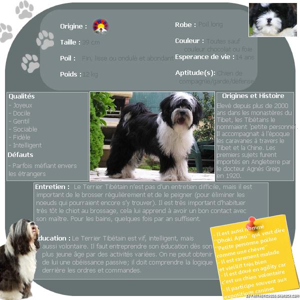 .  Le Terrier Tibétain   .