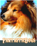 Photo de FantasticDogs