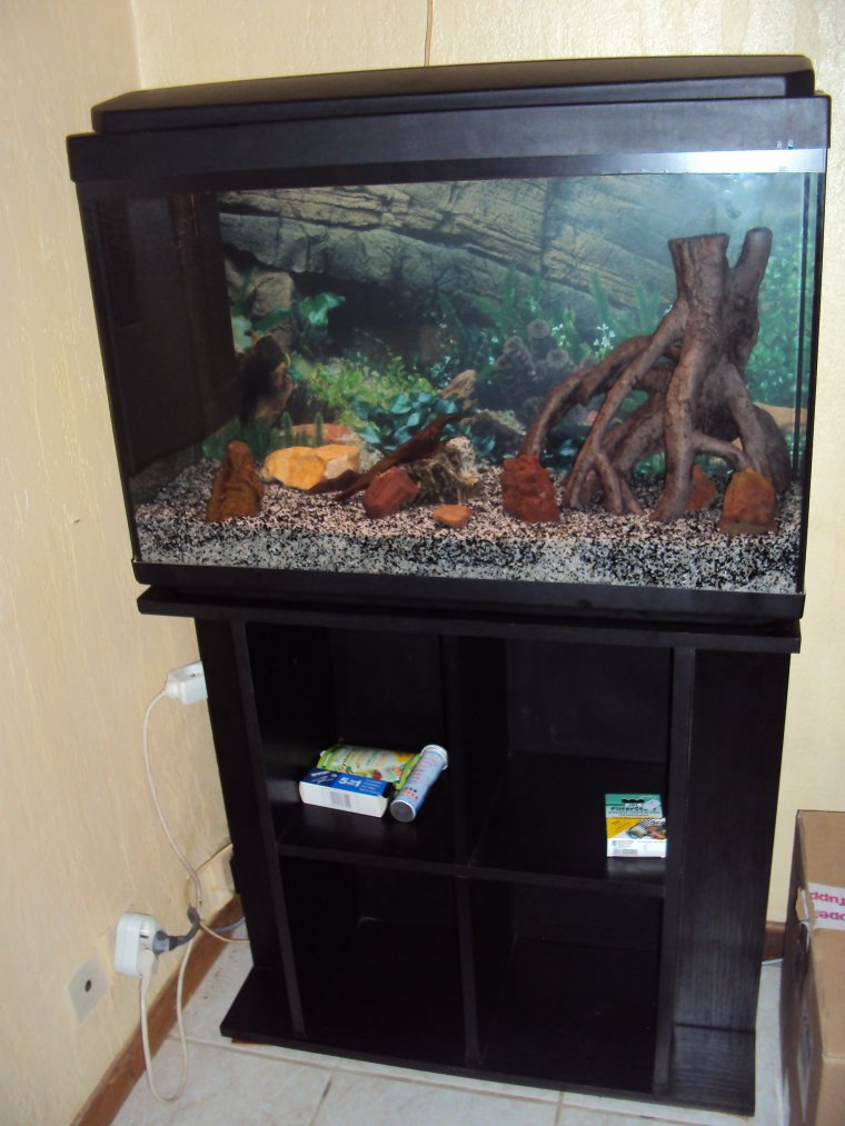 Démarrage de mon aquarium