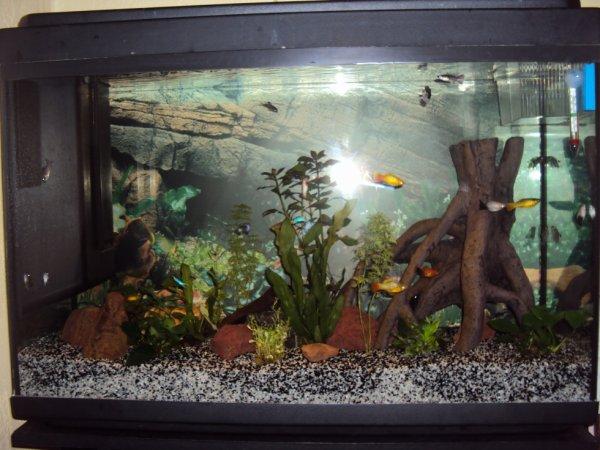 Les premiers poissons
