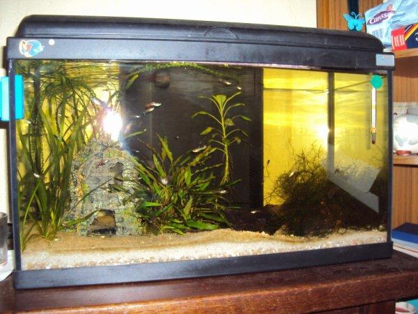 Mon deuxième aquarium