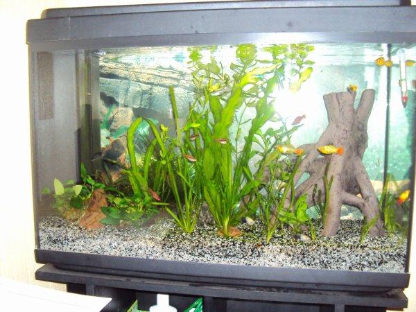 Evolution de l'aquarium
