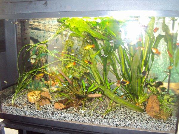 Aquarium tout refait!
