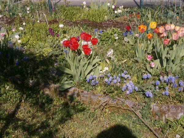 Printemps fleuri