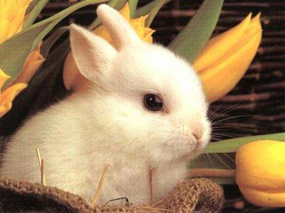 Un lapin ♥