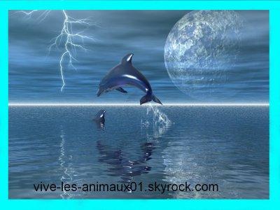 """"""" Et plouf ! Un dauphin ... """" ♥"""