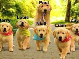 Les dogs direction