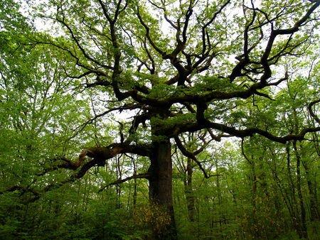 La forêt de Brocéliande et ses secrets