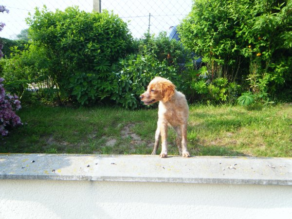 Ma chienne Handie