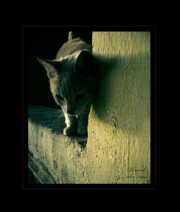 le petit chat de tizi