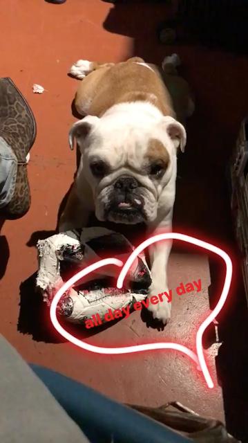 Bill Instagram Story le 13.11.2017 - le lendemain, même procédure - Tom Kaulitz 🙈  - toute la journée tous les jours 🐶⚽