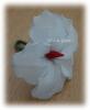 Hibiscus blanc