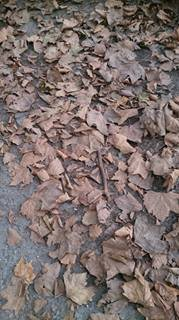 L automne est là