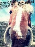 Photo de Photos-Equines-Concours