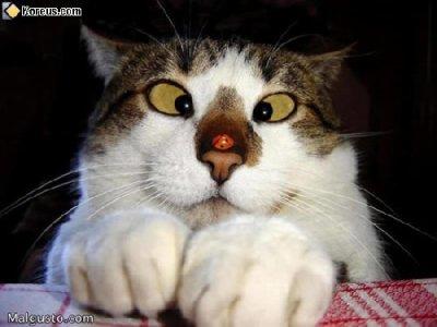 Etrange ce chat !