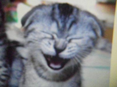 Méme les chats ont des fous rire !