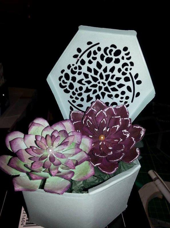 fleurs succulentes
