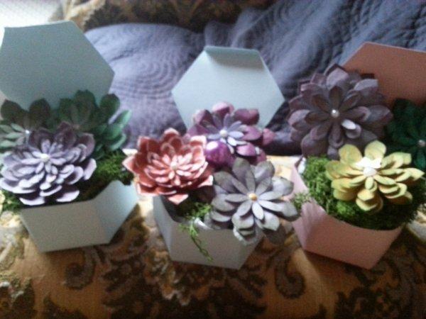 des succulentes