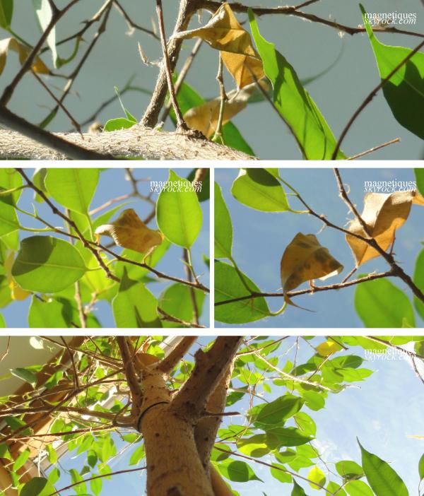 . « Nos pensées sont comme des feuilles, au moindre coup de vent elles s'envolent. » o7