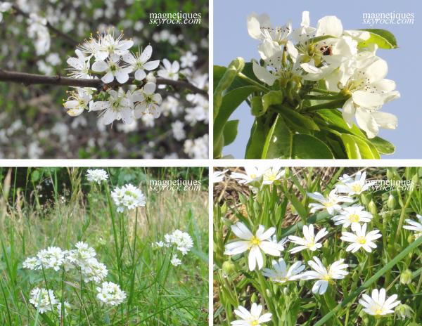. «Fleurs» synonymes de «beauté» ?o1/o5  o4