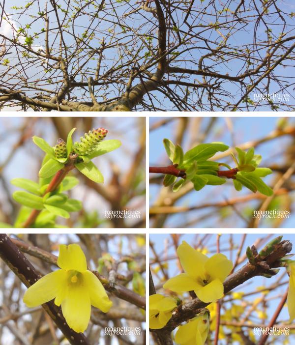 . «Après l'hiver....le printemps....»   o9