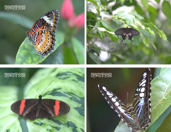 . «Le bonheur est comme un papillon : il vole sans jamais regarder en arrière.»   11