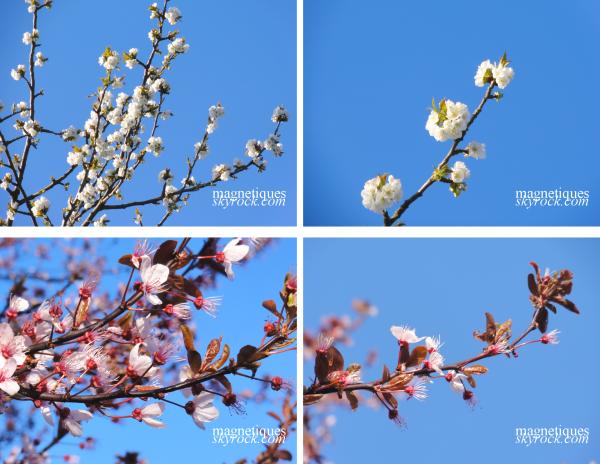 . «Le printemps..une saison magnifique»   16