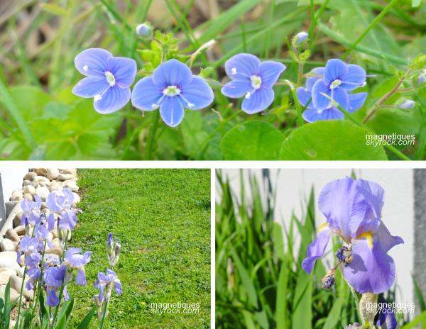 . «Fleurs» synonymes de «beauté» ?o5/o5  30