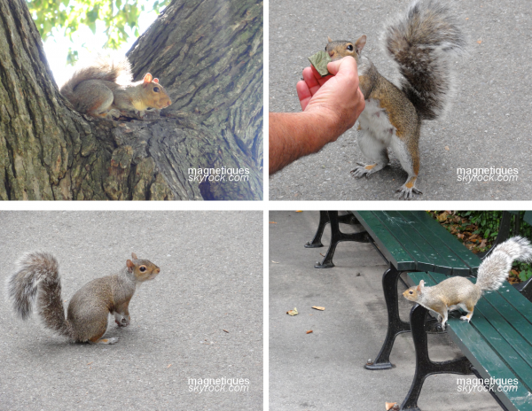 . «Des écureuils de Washington et de Boston»   31